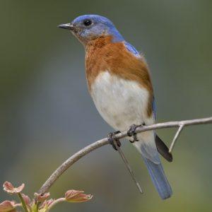 Bluebird, bright